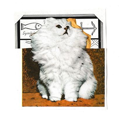 fluffycat.jpg