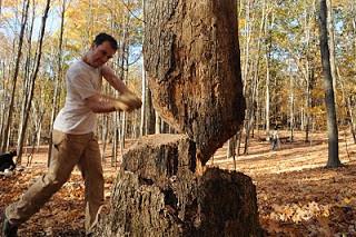 jb_tree.jpg