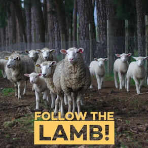 Follow the Lamb-Passover to Resurrection  Day 2