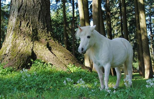 Pyxis the Unicorn.jpg