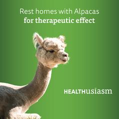 Alpacas in rest homes