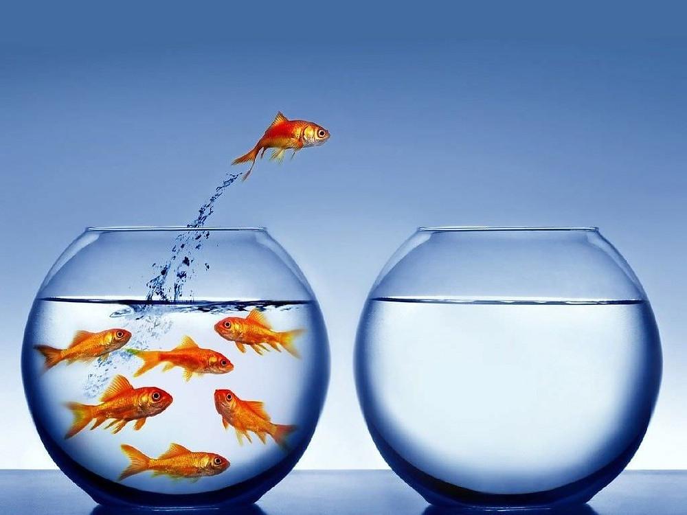 imagem de http://peixesdeaquario.com.br