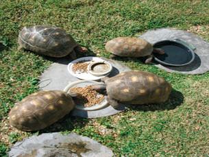 O piquenique das tartarugas