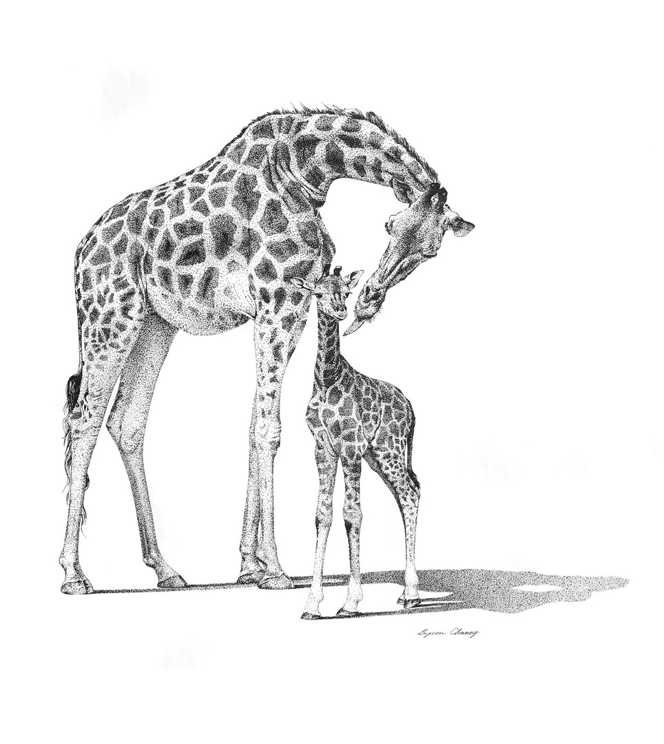Mom & Calf Giraffes.jpg