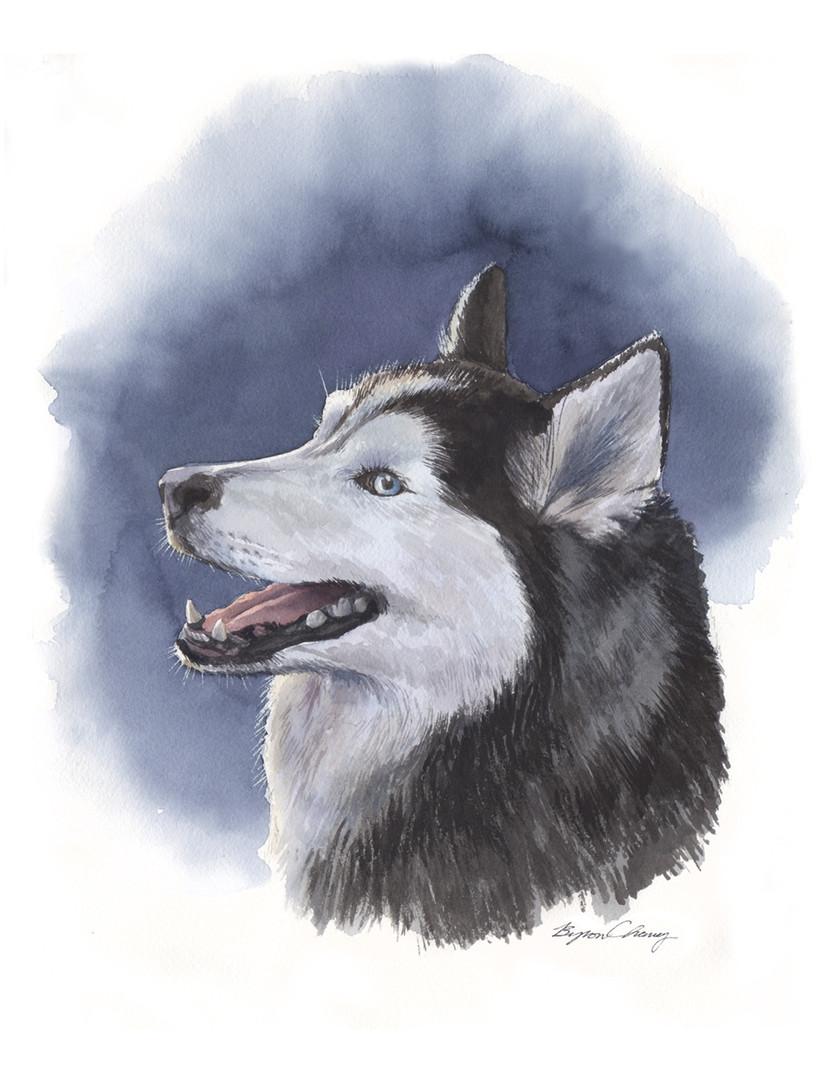 Siberian Husky portrait 72dpi.jpg