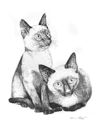 Siamese Cate.jpg