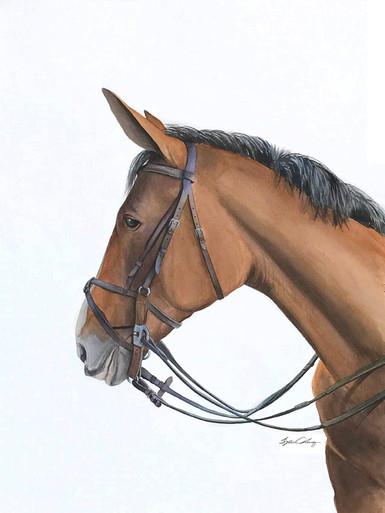 Horse Portrait 72dpi.jpg
