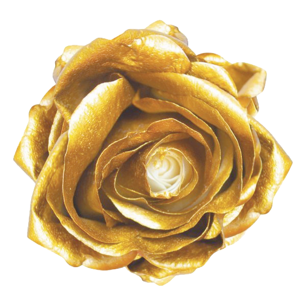 GOLDEN-ROSE-1-e1545074845353_edited_edit