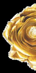 GOLDEN-ROSE-1-e1545074845353_edited_edit