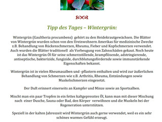 Tipp des Tages - Wintergrün