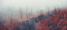 52. Red trees of Corin forest