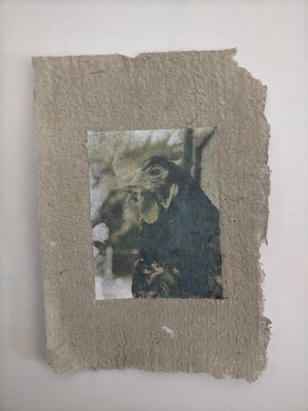 Saltopus, phototransfer on handmade egg carton paper