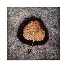 19. Melt - Andrew Morgan