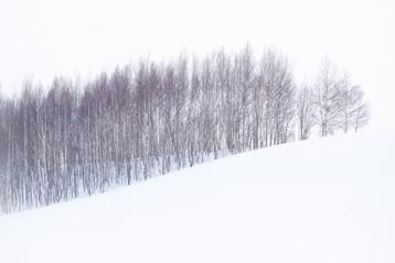 Andrée Lawrey, Hokkaido Winter / Treeline, 2019, inkjet print, 29.7 x 42cm