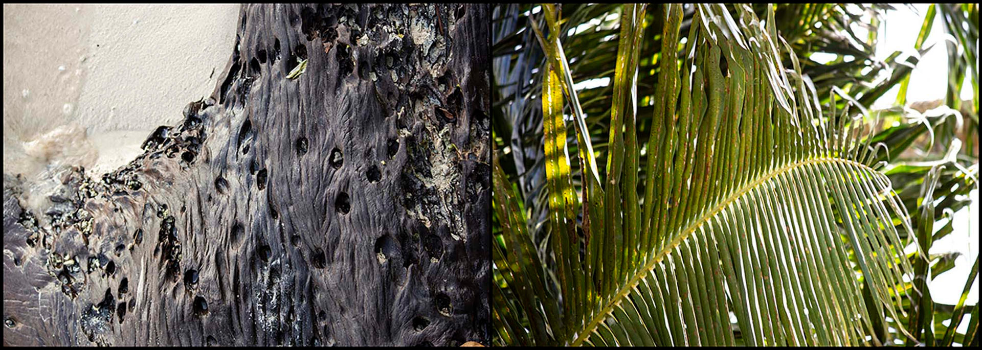 Wood & Frond