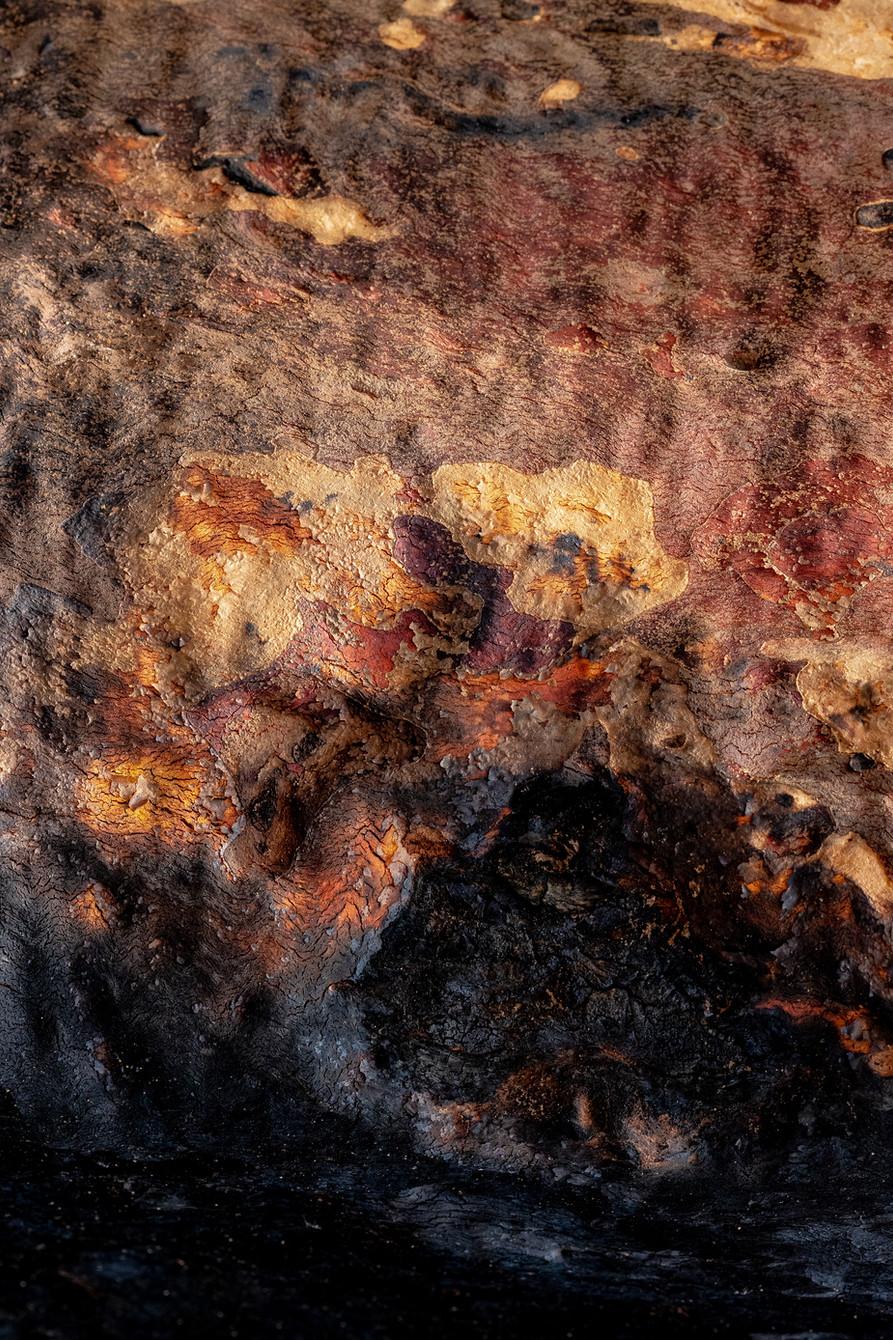 Samantha Hawker, Eucalyptus, Currowan Fire, 2020, inkjet print, 29.7 x 42.0cm, 1/10
