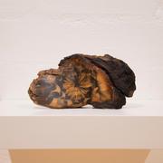 David Flanagan, Sunflower, 2020, Silver emulsion on burnt timber