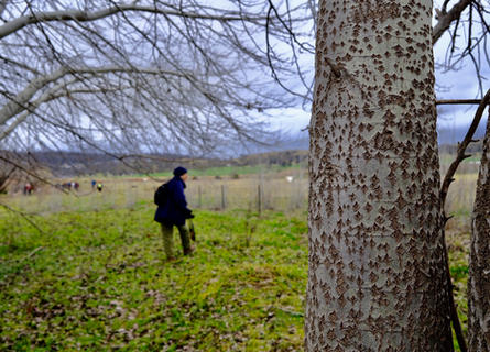 A thousand kiss forest, 2020, Hou Leong