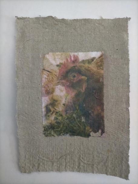 Silvisaurus, phototransfer on handmade egg carton paper