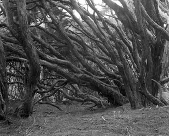 Kanuka forest remnant near Allans Beach