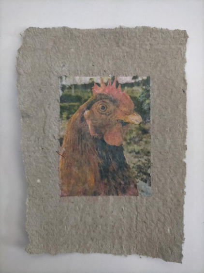 Compsognathus, phototransfer on handmade egg carton paper