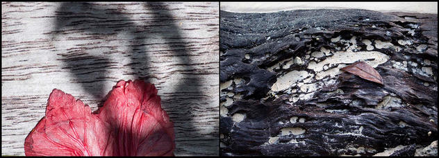 Hibiscus & Wood
