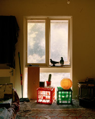 Pigeons, 2019, 20 x 25 cm, framed, Edition 2/3 + 1 AP, Archival print on cotton rag paper