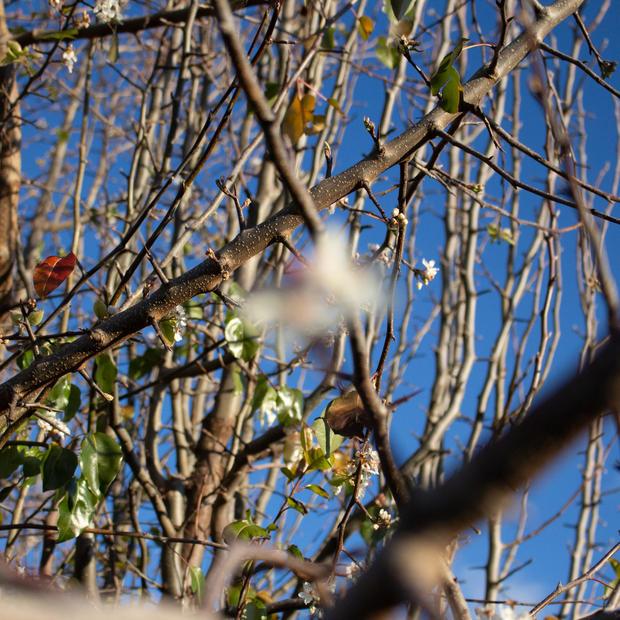 Winter Autumn confusion