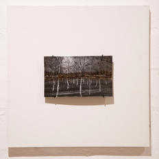 David Flanagan, Trees #4, 2020, Silver emulsion on welded steel