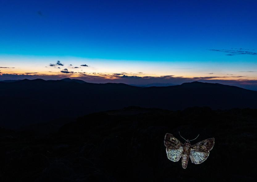 Vic McEwan, Bogong Moth 3 - Mt Mackay, 2020