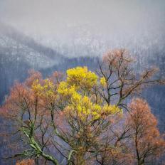57. Contrasts & seasons