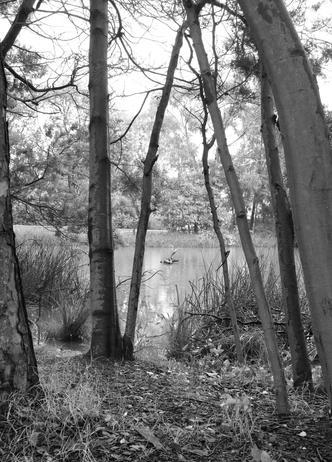 Wetlands, 2020, Andi Gray