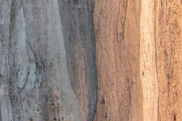 Samantha Hawker, Eucalyptus, Smoke Haze, 2020, inkjet print, 29.7 x 42.0cm, 1/10