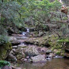 34. Cool Refuge II, Minnamurra Falls - Fiona Bowring-Greer