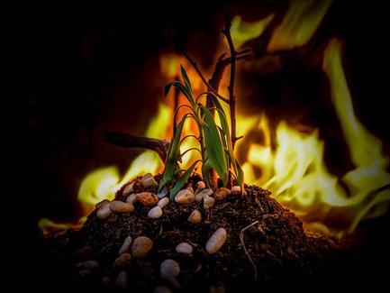 Burning Hopes