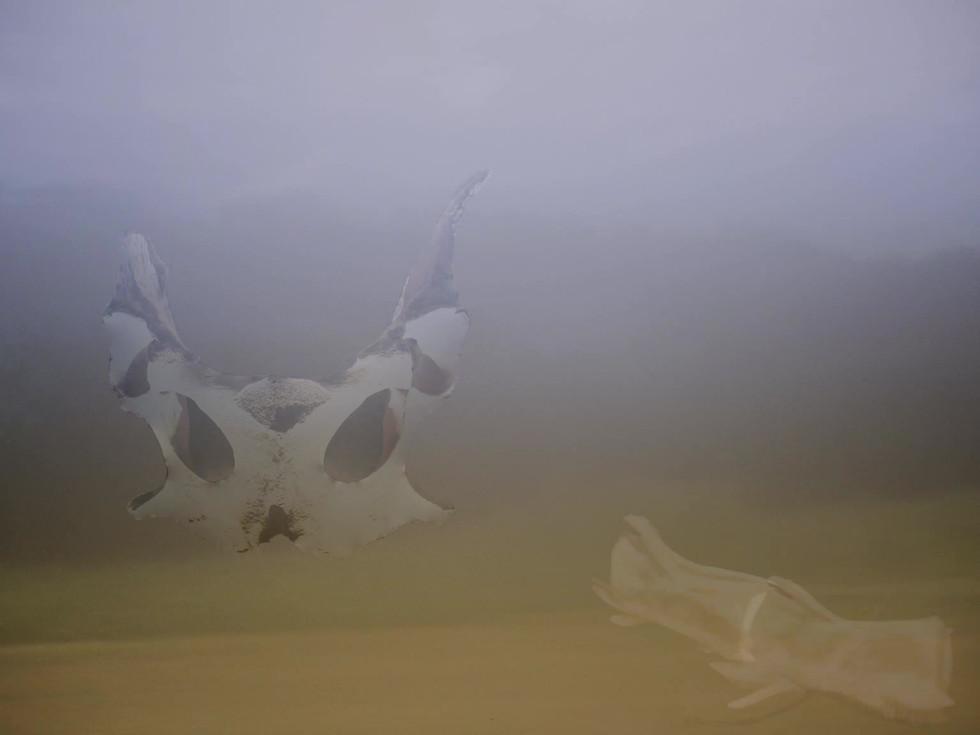 Bonescape