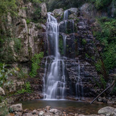 31. Cool refuge I, Minnamurra Falls - Fiona Bowring-Greer
