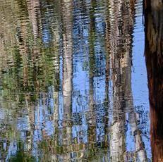 5. Ripple Reflections - Alan Charlton