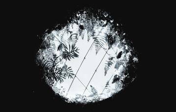 Kleber Osorio, Plant Window, 2018, Type c Print, 29 x 42cm