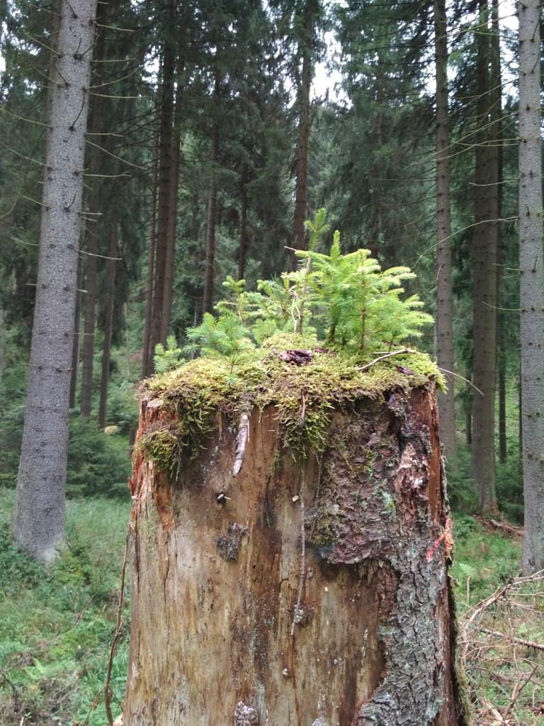 Naturbilder heilen