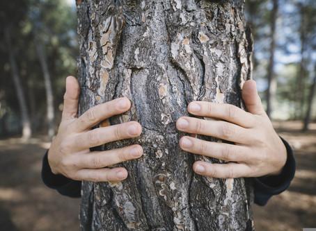 Einen Baum umarmen?!