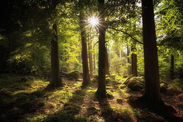 Seaq68_forest-2541928_1920.jpg