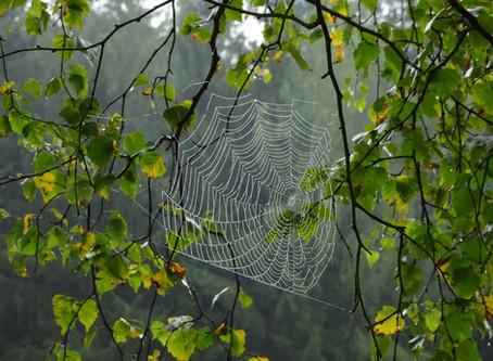 Klink dich ein ins woodwideweb und in die Waldbaden-Community