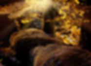 pixa_pezibaer_landscape-1042468_1920.jpg