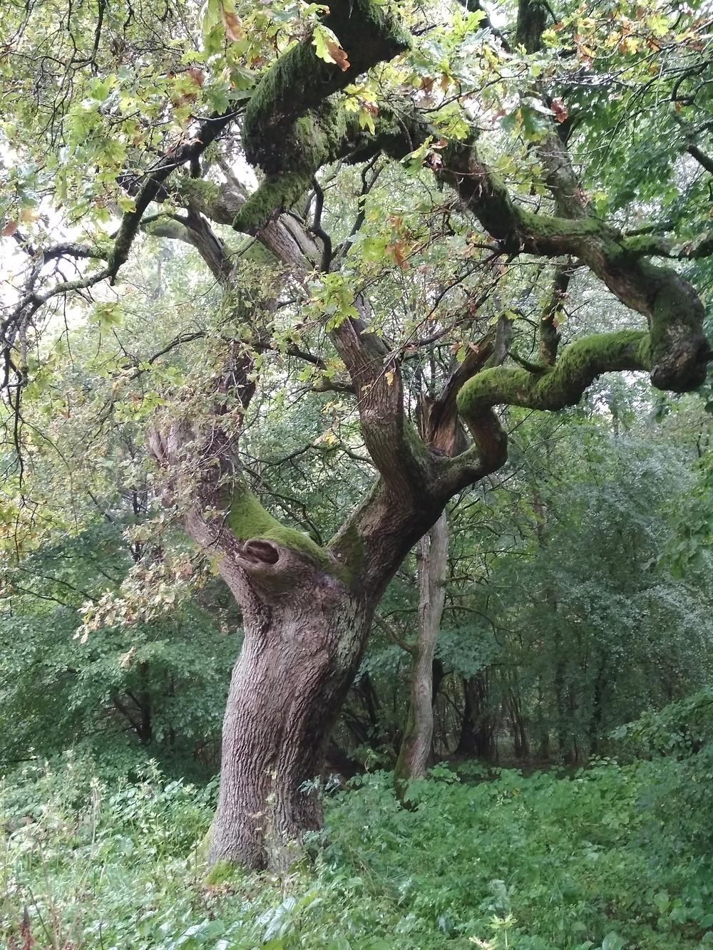 Geschichten aus dem Wald - Bäume erzählen