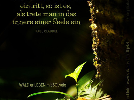 Seelenretter WALD
