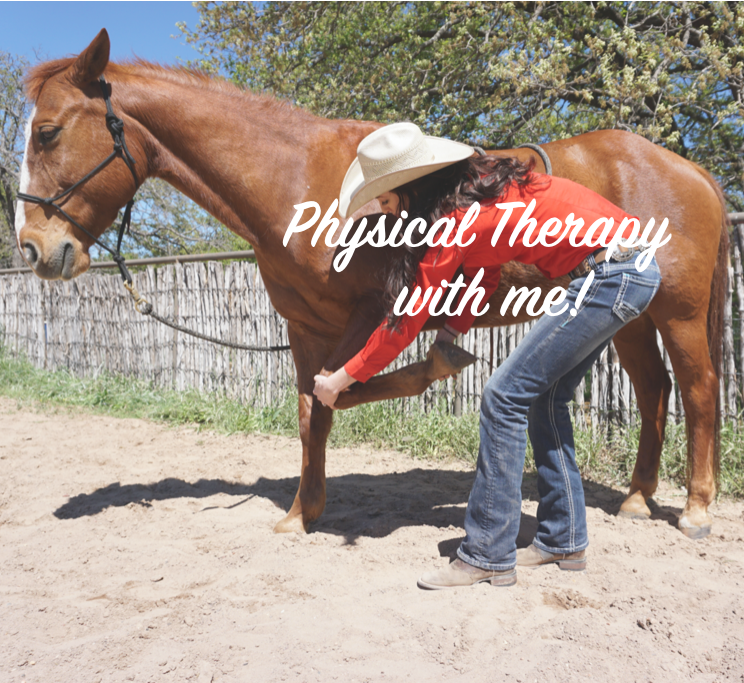 One-on-One Physical Therapy HORSES