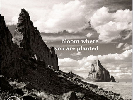 Bloom where you are planted - Cowgirl Chronicles