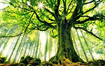 mighty-giant-tree-large.jpg