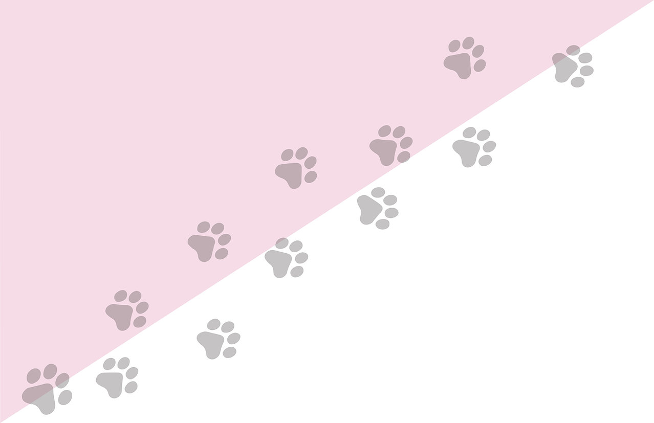 paws background-01.jpg